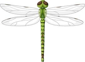 A green dragonfly on white background vector