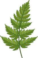 Fern leaf in cartoon style isolated vector