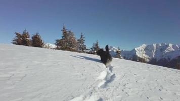 cão pastor bergamasco correndo na neve fresca nas montanhas video