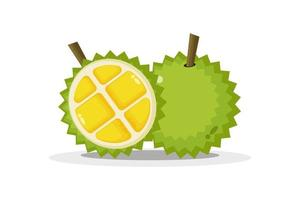 Durian and durian slices vector