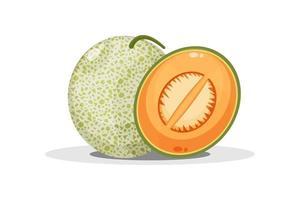 melón y rodajas de melón vector