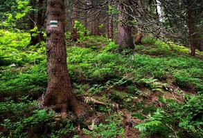 Hiking path sign on tree