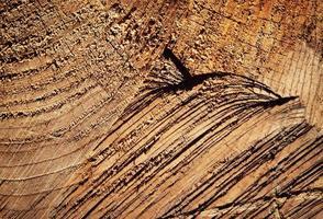 Rustic wood texture photo