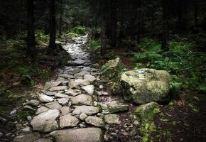 Stone walkway in dense forest photo