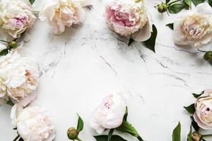 Peony flowers on a marble background
