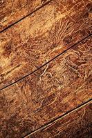 Old worn wood photo