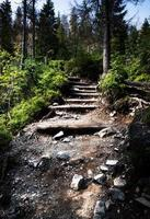 Stair stone walkway in the forest photo