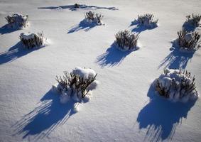 arbustos cubiertos de nieve foto