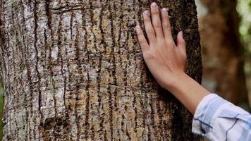 close-up de uma mão tocando uma árvore majestosa em uma floresta
