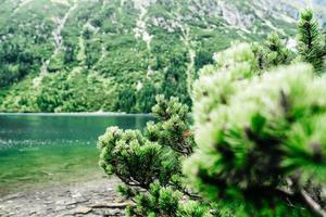 Alpine lake in summer photo