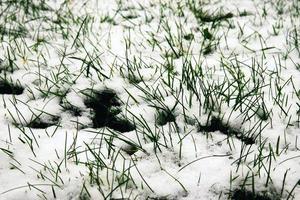 pasto verde cubierto de nieve foto