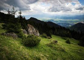 prado de montaña verde foto