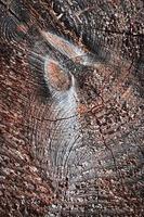 detalle de madera aserrada foto