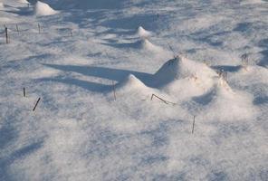 sombras alargadas en un prado nevado foto
