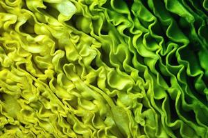 Detail of cabbage photo