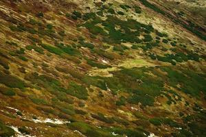 Autumn colored mountain slope photo