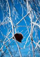 Leaf on a frozen branch