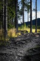 Forest path with overgrown tree roots photo
