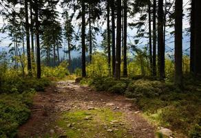 Forest path during the day photo