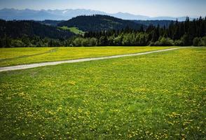 Foothill meadow with dandelions photo