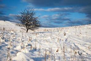Bush solitario en un prado nevado foto