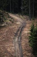 camino fangoso en el bosque foto
