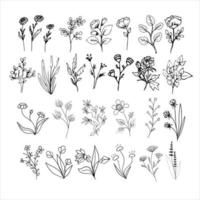 Doodles Herbs and flowers, set of hand-drawn flowers, floral set of wildflowers and herbs, vector objects isolated on a white background.