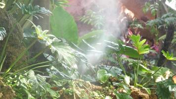 Philodendron Xanadu Plant with Foggy Spray Tropical Garden video