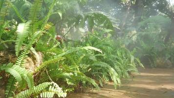 Field of Ferns and Path Tropical Rainforest Garden video