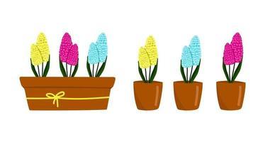 conjunto de jacinto amarillo, azul y rosa púrpura en una maceta, hermosas flores de primavera en una maceta marrón, un regalo para el día de la mujer, ilustración vectorial en estilo de dibujos animados, plano, dibujo a mano. vector