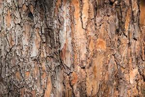 primer plano, de, marrón, corteza de árbol foto