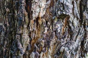 Close-up of tree bark photo
