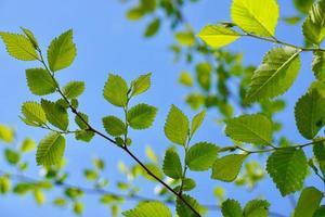 hojas de árboles verdes en la temporada de primavera foto