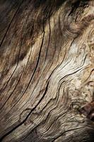 Detail of dry wood photo