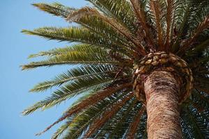 palmeras y cielo azul en un clima tropical foto