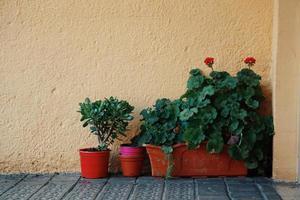 macetas de flores en la calle foto