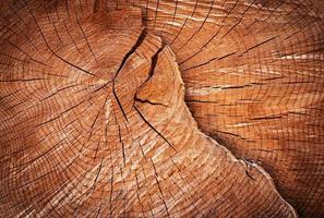 Cracked old wood photo