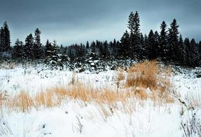 paisaje de invierno oscuro con pasto seco foto
