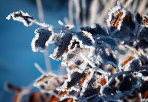 detalle de hojas congeladas foto