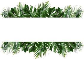 Marco de hoja verde tropical sobre un fondo blanco. foto