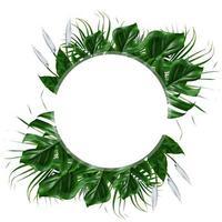 Tropical green leaf frame on a white background photo
