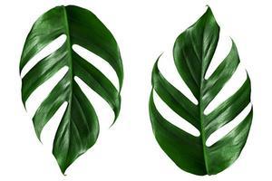 vista superior plana laicos de hojas de palmera verde foto
