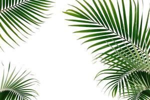 Tropical palm leaves on a white background photo