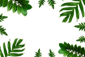 Tropical palm leaves frame on a white background photo