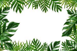 Marco de hojas de palmeras tropicales sobre un fondo blanco. foto