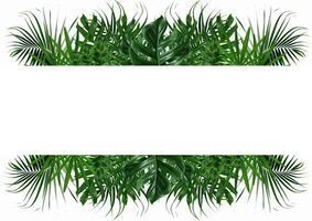 Marco de hoja de naturaleza verde sobre un fondo blanco. foto