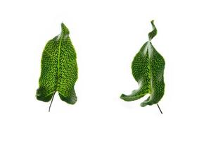 Tropical fern leaf on a white background photo