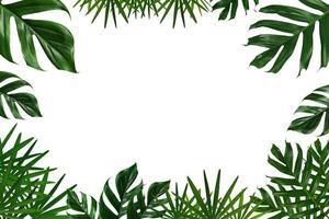 Marco de hojas tropicales verdes sobre un fondo blanco. foto