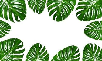 Group of Monstera leaves frame on a white background photo