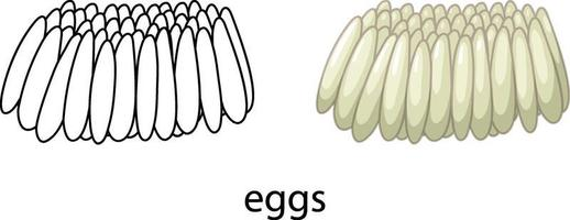 Eggs of mosquito in colour and doodle isolated vector